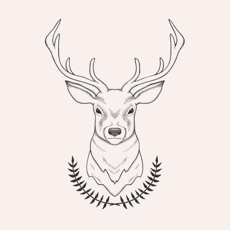 állat fej: Vektor, kéz, húzott, Ábra, őz és babér