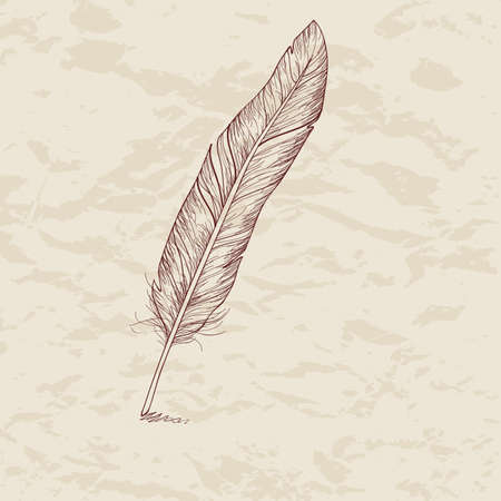 indian feather: Vector illustration of feather