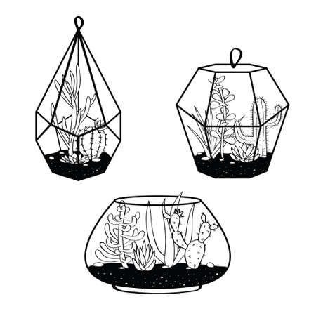 Vector set with black and white cactuses and succulents in terrariums. Illustration