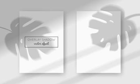 Vector two A4 cards mockup with shadow overlays on top. Organic and window frame shadows for natural light effects. Trendy photo-realistic illustration with monstera leaves