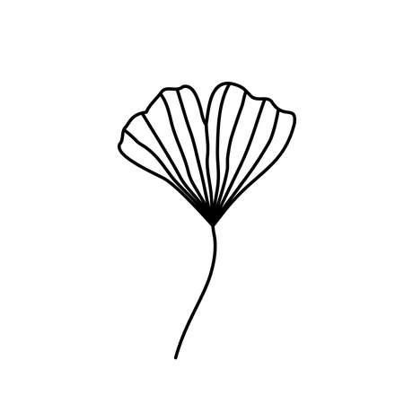 Vector botanical illustration with Ginkgo biloba hand drawn leaf isolated on white background.
