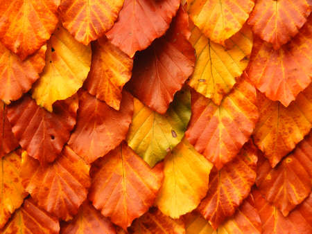 Background snap of autumn leaves. photo
