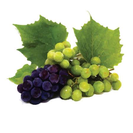 de uva (uva, vid)