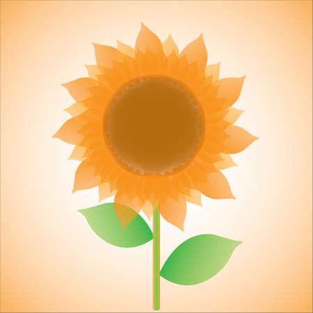 sunflower isolated: illustration of  sunflower, isolated Illustration