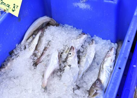 hake: Fresh fish on a fish market cooled with crushed ice. Fresh hake in a blue box, close-up shot. Stock Photo