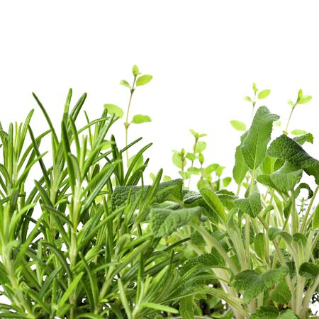 mayoral: Fresh herbs, herbal garden or herb cultivation. Fresh cooking ingredients, isolated on white background. Close-up of fresh say, oregano, rosemary and thyme. herbal medicine. Stock Photo