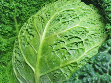 savoy cabbage: Savoy cabbage, close-up shot