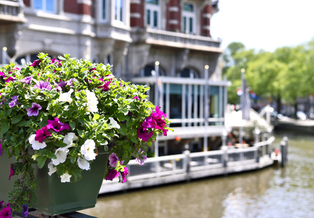 made in netherlands: Selective focus of flowers in a flower pot. Amsterdam city with a restaurant at the canal in the background. Stock Photo