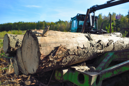 lumber industry: Lumber industry, forestry tractor with tree trunks in a autumn forest. Stock Photo