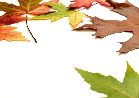 multicolored: Autumn background with multicolored leaves and copyspace