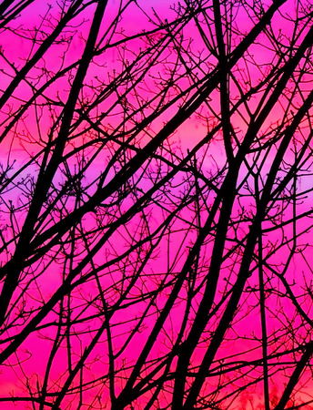afterglow: Trees in the afterglow.