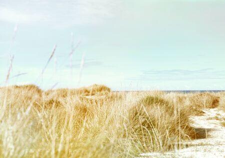 sund: Beach dunes in the sund. Beach scene with copy space.