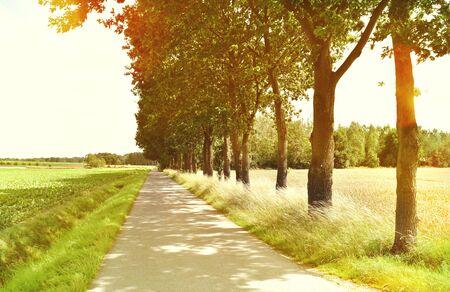 필드 및 포리스트, 자연 배경을 통해 목가적 인 보도. 국가 도로 또는 여름에 목가적 인 풍경을 통해 거리. 포리스트, 렌즈 플레어 필드입니다. 스톡 콘텐츠