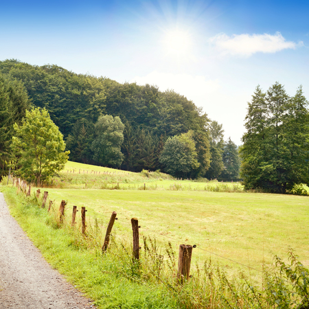 single lane road: Idyllic country road in the sun, with copy space and forest. Single lane road through fields and pastures, nature background.