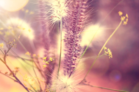 toned image: Various grasses of a field in sunlight. toned image with copy space. Stock Photo