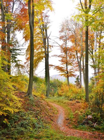 nature backgrounds: Autumn forest with sunbeam and copyspace. View of a single lane road in an autumn forest.