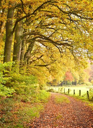 single lane road: Autumn forest with copyspace. View of a single lane road in an autumn forest. Stock Photo