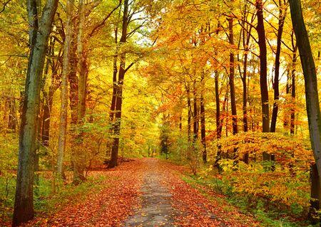 Herbstwald mit Exemplar. Blick auf eine einspurige Straße in einem Herbstwald.