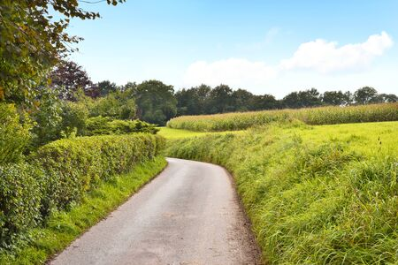 single lane road: Idyllic country road in the sun, with copy space and forest. Single lane road