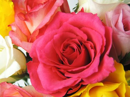 multi colored: Bouquet of multi colored roses, isolated on white