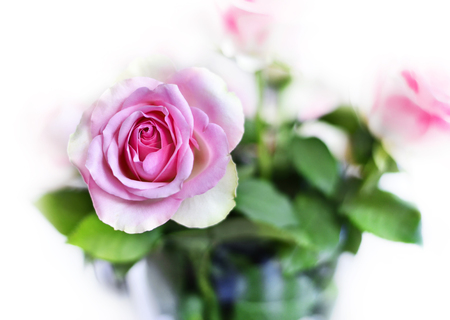 Bunch or flower bouquet of pink roses. Rose Bouquet. Stock Photo