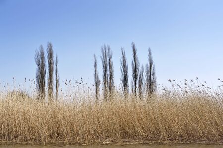 riverside landscape: Wetland with reeds and clear blue sky. Nature background, landscape on a riverside. Scenics. Reeds and beach dunes with view to the sea.