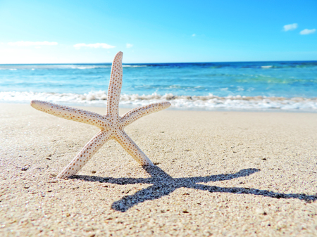 Starfish and sea, summer at the beach Stock Photo