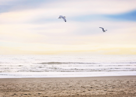 the seagulls: Evening beach scene with flying seagulls Stock Photo