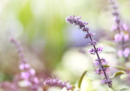 Purple dead nettles in the sun. Wildflowers with copyspace and smooth light. Selective focus on the foreground.