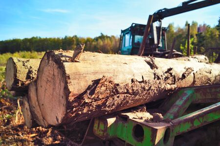 lumber industry: tractor in an autumn forest. Lumber Industry machine with pile of wood.