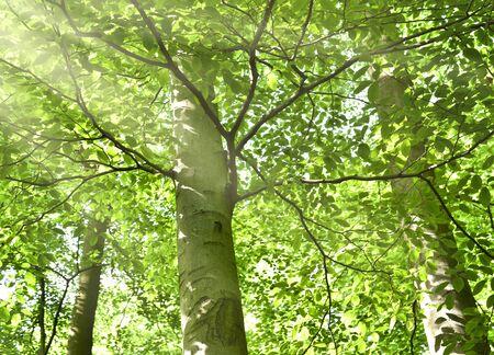 太陽光線を持つフォレスト。滑らかな日光、葉のおおいを通って落ちると春の混交林です。人がいない静かな情景、自然の背景。