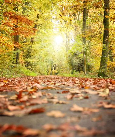 Idyllische Waldweg oder auf der Straße in einem Herbstwald, mit Sunbeam und bunten Baum Blätter.