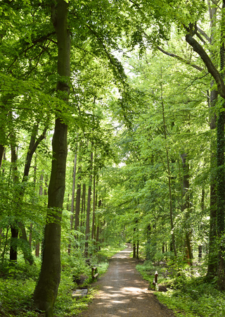 forest path: Idyllic forest path with smooth sunlight. Nature background, spring forest. Selective focus of a footpath through a mixed forest. Stock Photo