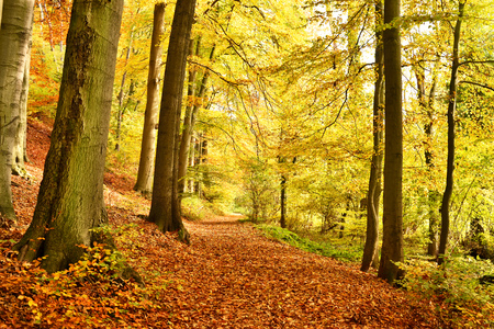 Idyllic forest path or road in an autumn forest, with multicolored tree leaves.