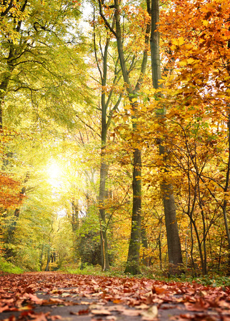 forest path: Idyllic forest path or road in an autumn forest, with sunbeam and multicolored tree leaves. Stock Photo
