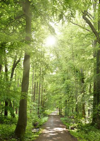 sentiero nel bosco idilliaco con la luce del sole liscia. Sfondo della natura, la foresta di primavera. fuoco di un sentiero attraverso un bosco misto.