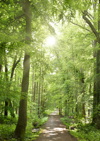 Idyllic forest path with smooth sunlight. Nature background, spring forest. Selective focus of a footpath through a mixed forest. Standard-Bild
