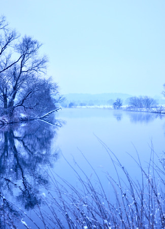 riverside tree: Winter scene at a river with fog and bare trees.