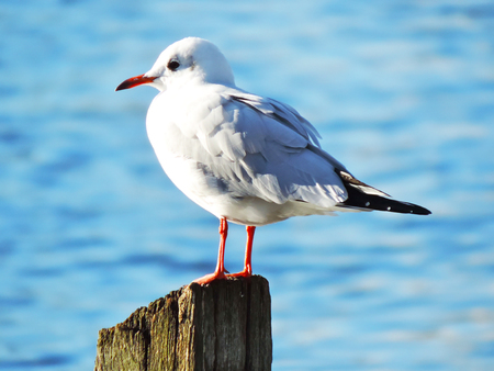 Seagull sitting on a pole in the sun