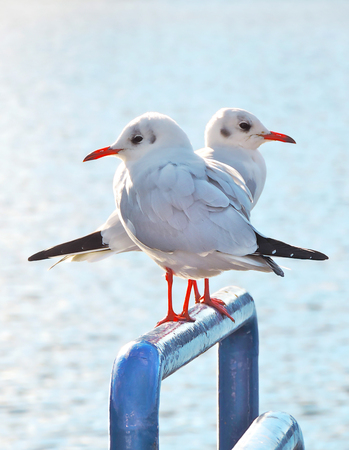 Seagulls sitting on a pole in the sun