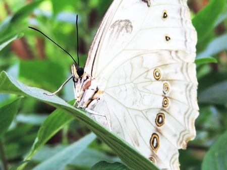 White butterfly on a tropical plant in the rainforest Stock Photo