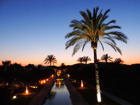 tropical garden: Tropical garden by night with silhouette of a palm tree.