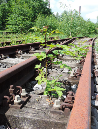 Old railway track with weed growing along the trail. Stock Photo