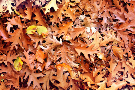 lush foliage: Forest floor in autumn with multicolored lush foliage.