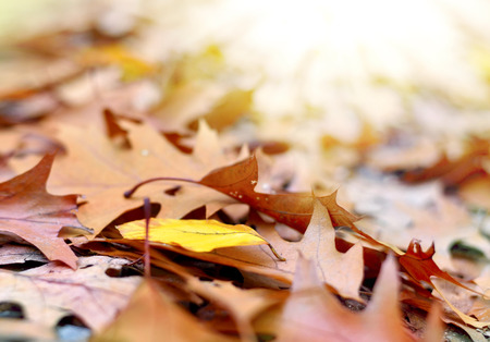 lush foliage: Forest floor in autumn with multicolored lush foliage and copyspace.