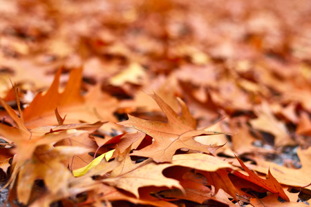 lush foliage: Forest floor in autumn with lush foliage and copyspace.