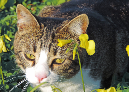 haunting: Cat haunting in a flower meadow.