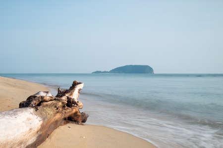 toter baum: Toter Baum am Strand Punkt auf Insel Lizenzfreie Bilder