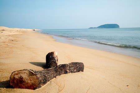 tree dead: Dead tree on the beach