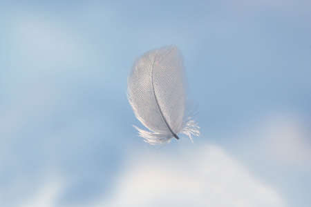 feather in clouds